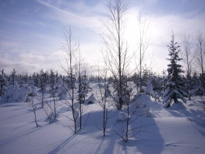 Arctic winter
